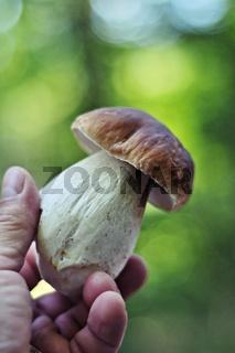 Frischer Steinpilz in der Hand