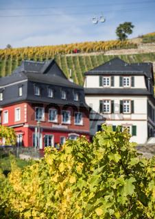 herbstliche Weinberge in Rüdesheim am Rhein, Weinstadt in Deutschland