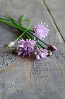 Schnittlauch mit Blüte