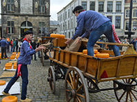 Dutch cheese boys loading Gouda cheese truckle at the cheese market, Gouda, Netherlands