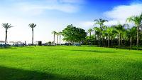 Green meadow in Turkey
