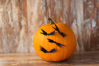 pumpkins with bats or halloween party decorations