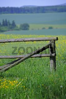 altes Gattertor auf einer Blumenwiese, Hessen, Deutschland