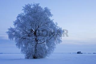 frostiger, nebliger Sonnenaufgang am Alpenrand, Kochelsee, Bayern Starker Raureif in den Baeumen, frosty and foggy sunrise in the bavarian alps, Hoarfrost in the trees