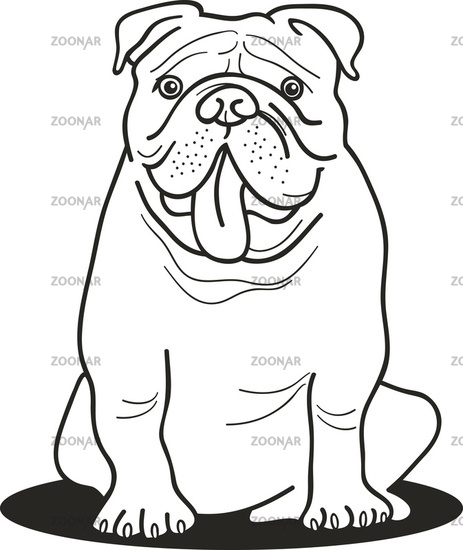 Colored English Bulldogs Bulldog For Coloring Book