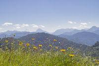 Bergwiese in den Bayrischen Voralpen