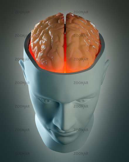 Male head abstract with a visible brain