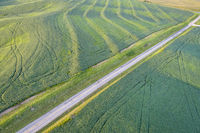 green soybean fields aerial view