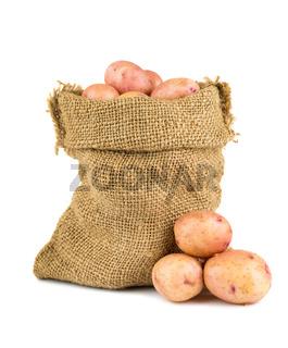 Ripe potatoes in burlap sack