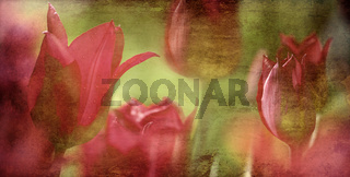 tulips textured concept