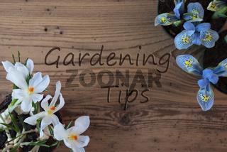 Crocus And Hyacinth, Text Gardening Tips
