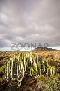 Cactus Desert Sunset in Tenerife Canary Island