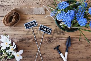 Flowers, Signs, Text Spring Break