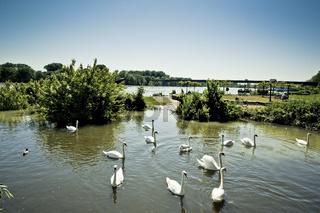 Rhine High Water in Speyer in 2013