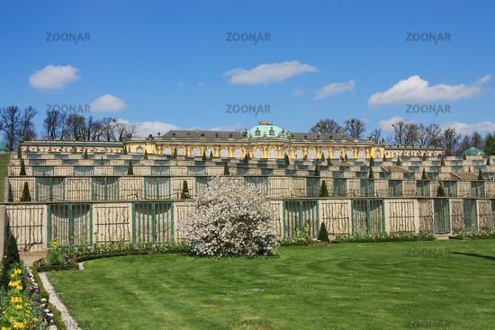 castle of Sanssouci & Vineyard