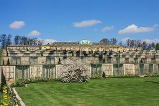Schloss Sanssouci & Weinberg