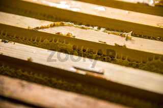 Frames in which is stored Unfinished fresh honey in honeycombs