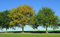 autumn, trees, autumn atmosphere,