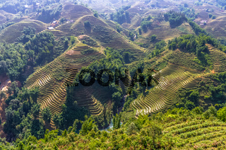 Amazing view on rice terrace in Sapa village, Vietnam