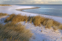 White dune with beach grass and snow at the west beach of Sylt, Schleswig-Holstein, Germany