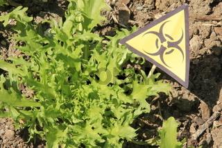 Warnung 'Biogefährdung' im Salat