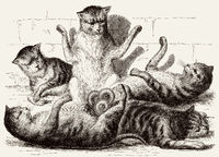 Five cats are joined at the tails, illustration, 19th century