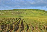 F--Weinbau in Burgund bei Chablis2.jpg