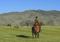 Mongolian horse rider in Orkhon valley, Khangai Nuruu National Park, Oevoerkhangai Aimag, Mongolia