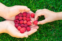 Child taking raspberries with mother's hands