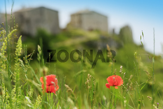 Poppy flower Elcito
