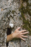 Ghost hand growing out of a tree