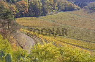 Herbstliche Hegaulandschaft am Hohentwiel