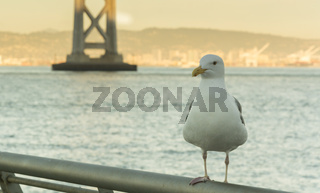 seagull in san francisco