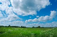 Russian  summer meadow