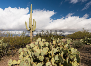 Storm by Saguaro National Park Tucson