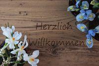 Crocus And Hyacinth, Herzlich Willkommen Means Welcome