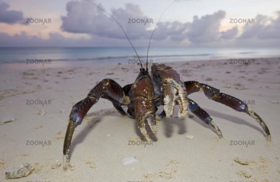 krabber på cuba