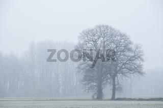 Hochsitz im Nebel