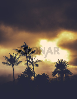 Retro Style Hawaii Palms At Sunset