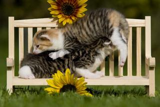 kaetzchen spielen auf Sitzbank, kitten playing on a seat bench