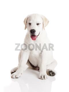 Funny Puppy
