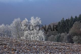 Odenwaldlandschaft mit Raureif