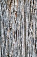 old juniper tree texture
