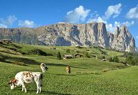 on Seiser Alm with View to Schlern Mountain,South Tirol,Italy