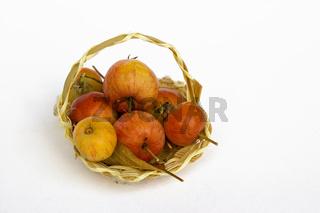 Apfelkorb / basket with apples