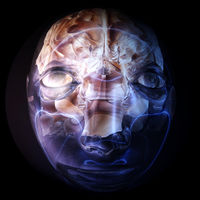Digital 3D Illustration of a human Brain