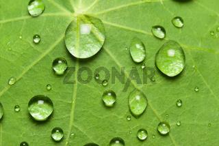 Lotuseffekt und Wassertropfen