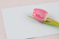 Blumengruß | Flower greetings
