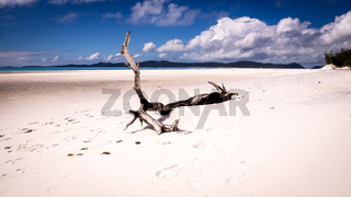 Tree trunk on beautiful white beach
