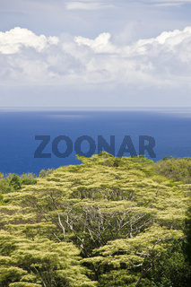 vegetation_maui_hawaii